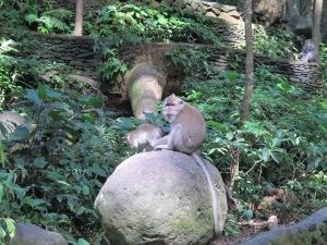 monkey forest 1