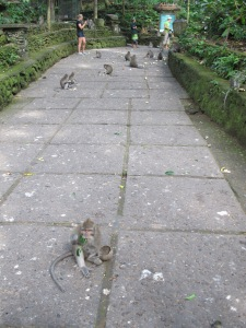 monkey forest 2
