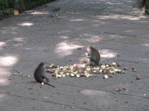 monkey forest 3