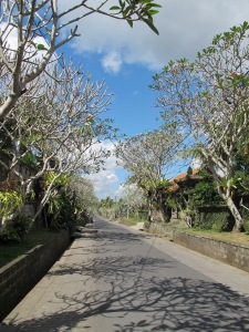 "the wisteria lane of ubud ? ""frangipani"" lane"