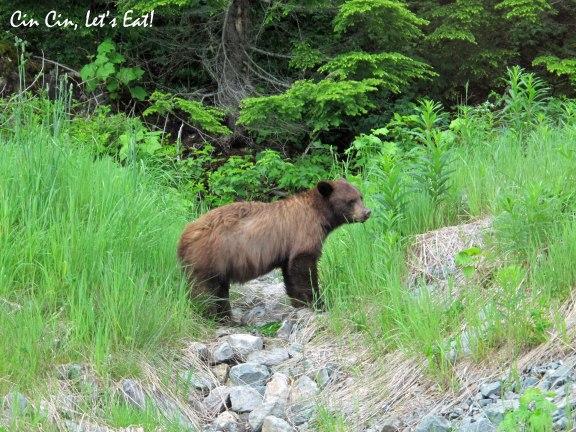 bear in whistler