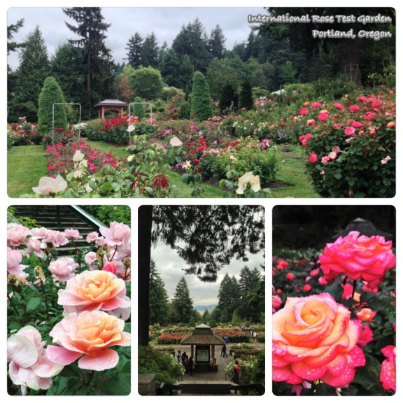 portland-rose garden