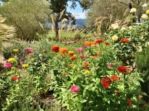 mumm-garden